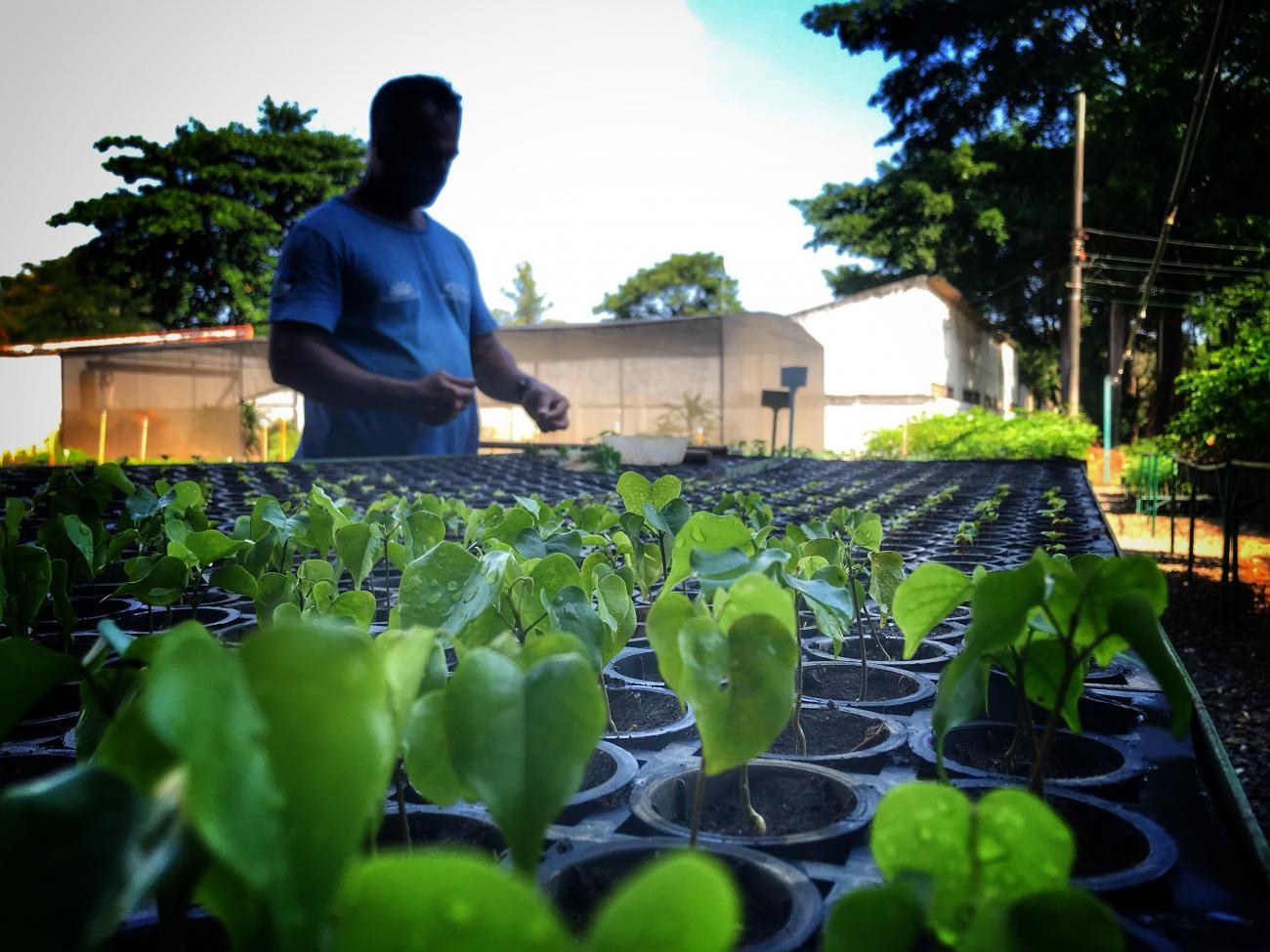 Cedae doa mudas para cidades do interior pelo Dia do Meio Ambiente